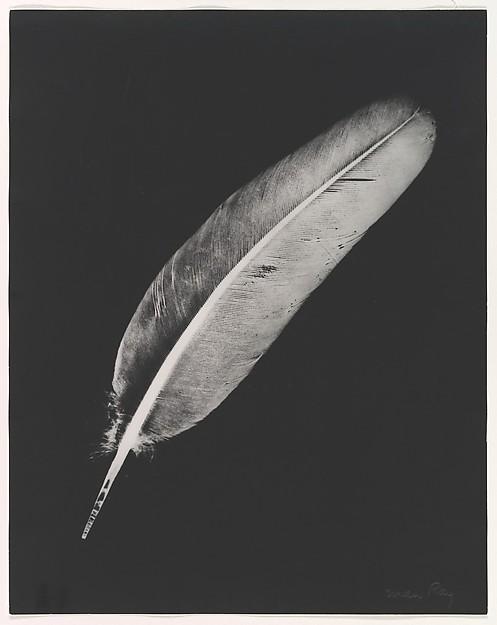 man ray plume