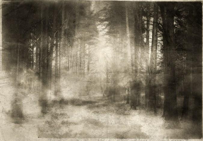 yaroslav forest