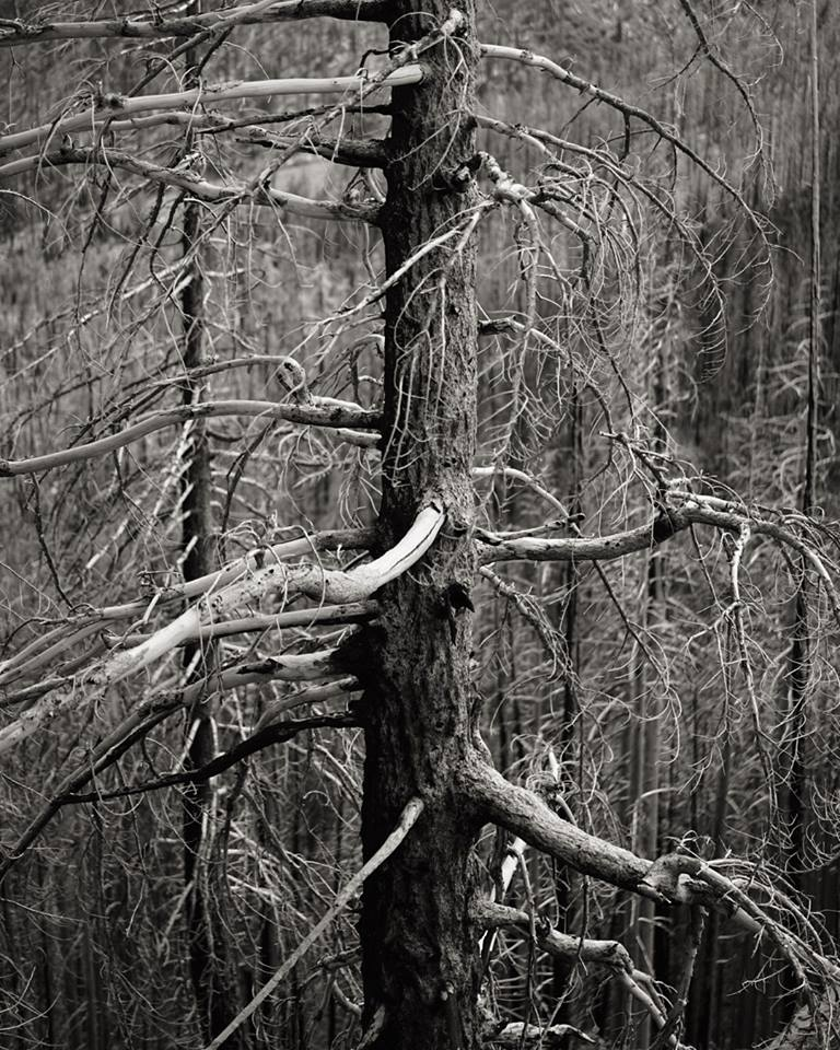 beau-v-fall-tree
