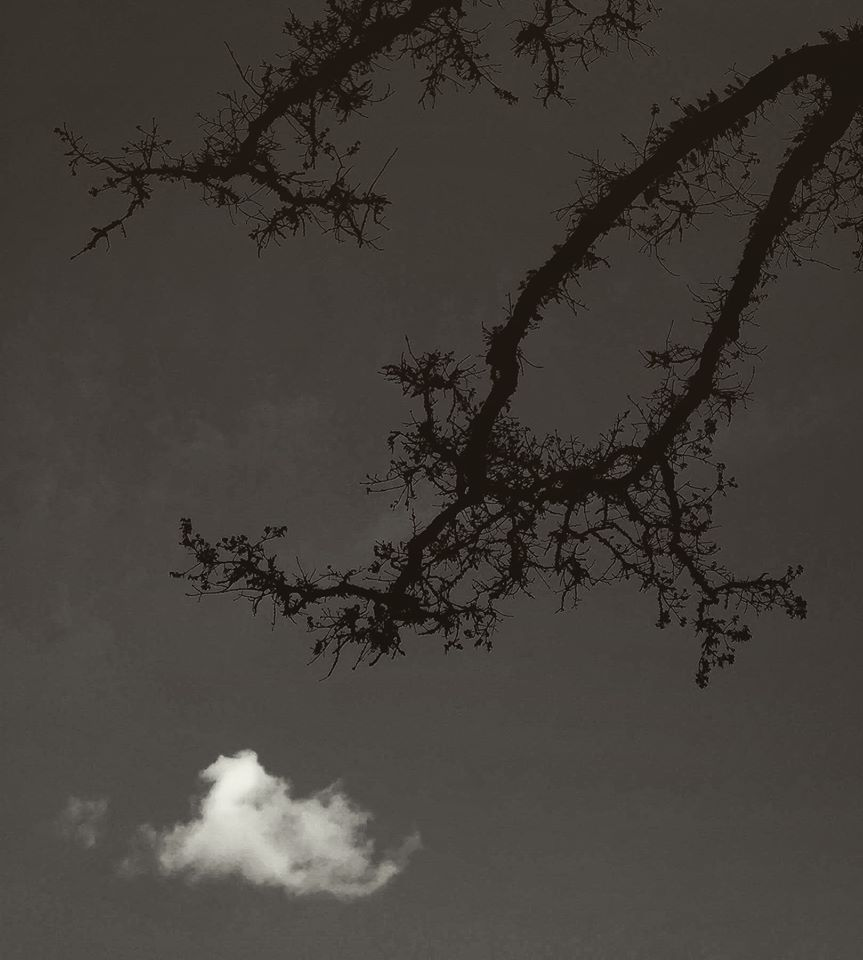 beau-v-tree-branch-cloud
