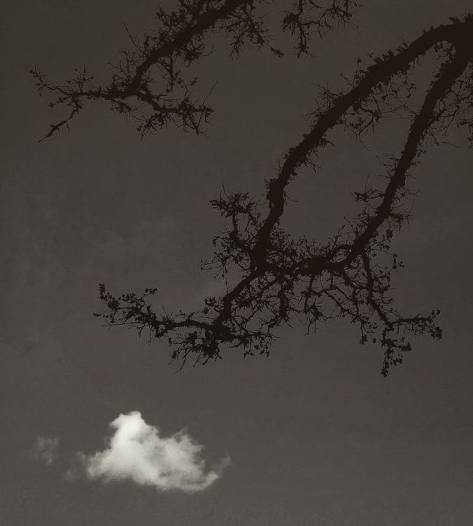 beau-v-tree-branch-cloud