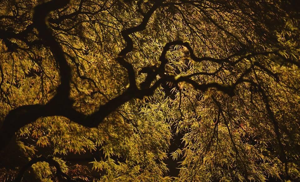 beau-v-tree-branch-stretch-river