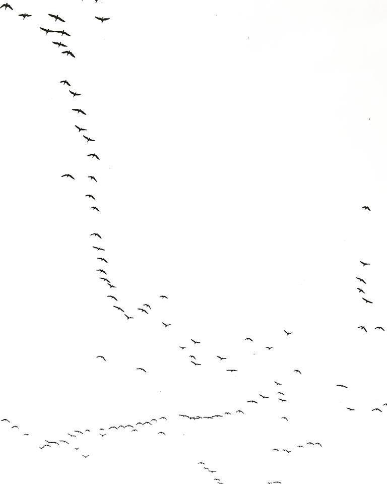 beau-vandendolder-flock-of-birds