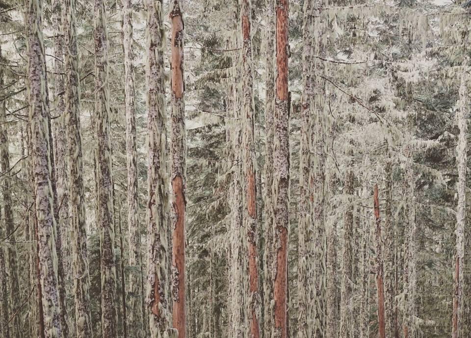 beau-vandendolder-trees-trees-trees-lines