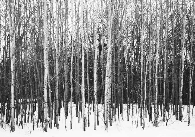 beau v photo of white trees b w
