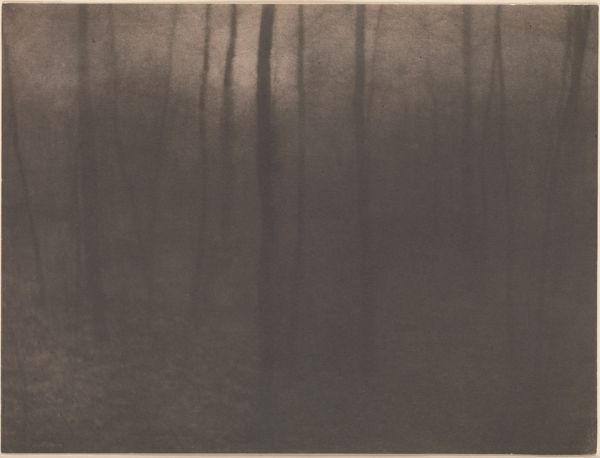 Edward Steichen woods twilight