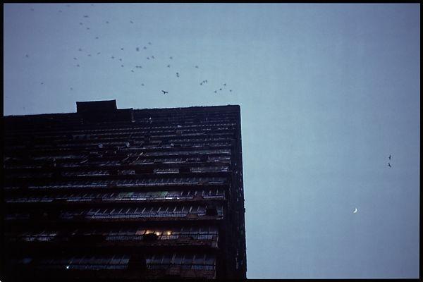 gabriel orozco building and birds