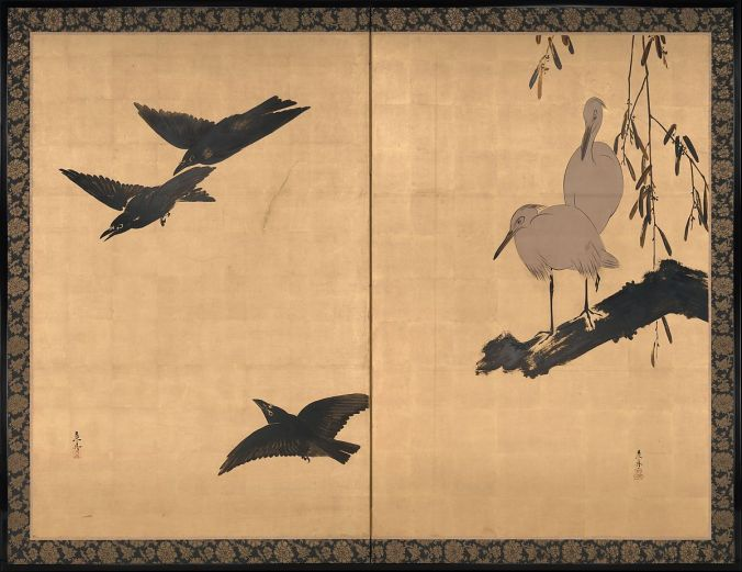 egrets and crows